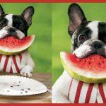 perro con sandía